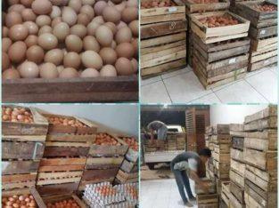 Rumah telur sidoarjo