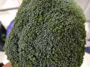 Brokoli Fresh Kualitas Super Premium (Baru Panen)