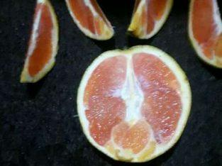 Buah merah atau buah rena atau blood orange