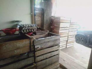 Ready telor cod bisa ke lokasi harga 22-24