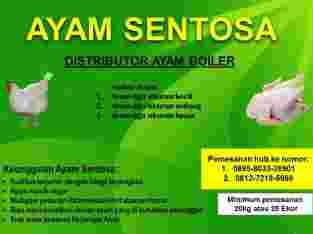 Distributor Ayam Boiler