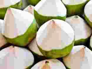 Distributor kelapa muda