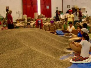 Supplier Kopi Toraja Arabica