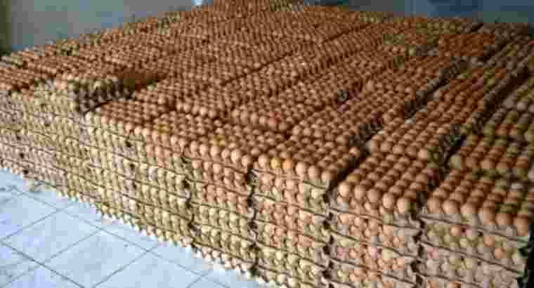 supplier telur ayam bebek puyuh Aceh