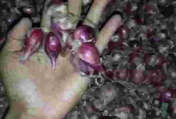 Bawang merah brebes grade B per karung 50kg