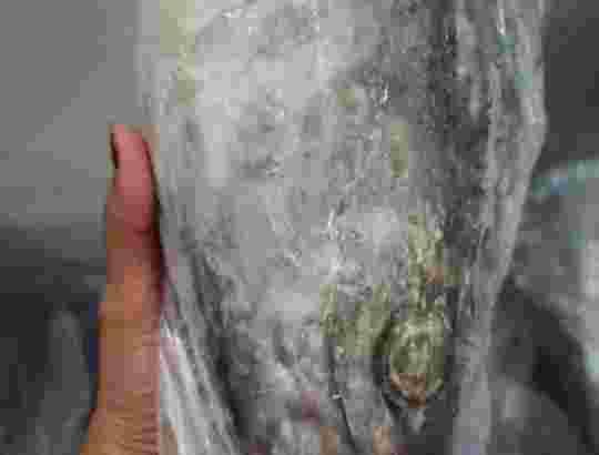Distributor Ikan Laut