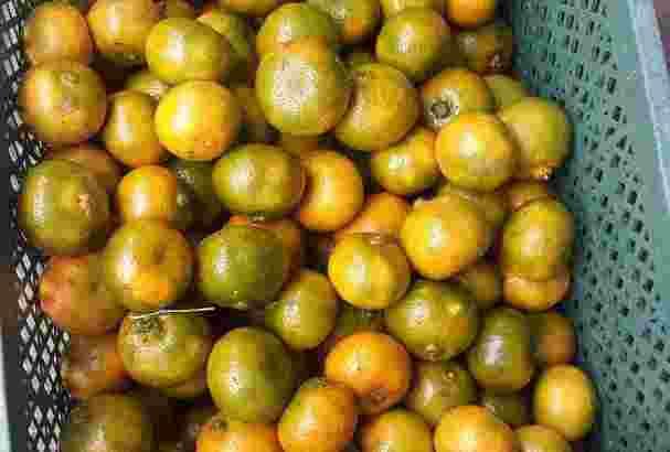Ready jeruk kintamani eceran dan resseler