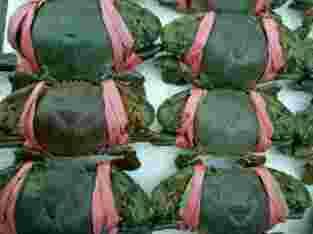 kepiting hijau / bakau