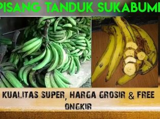 Supplier Pisang tanduk super sukabumi