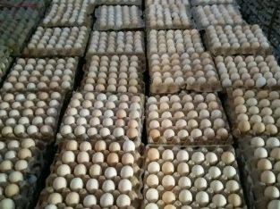 DISTRIBUTOR Telur ayam kampung omega 3 bergizi