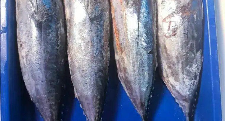 Jual Aneka Ikan Segar Langsung dr Nelayan