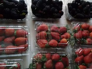 Supplier Strawberry Blackberry Raspberry