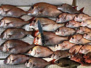 Distributor Aneka Ikan dan Hasil Laut
