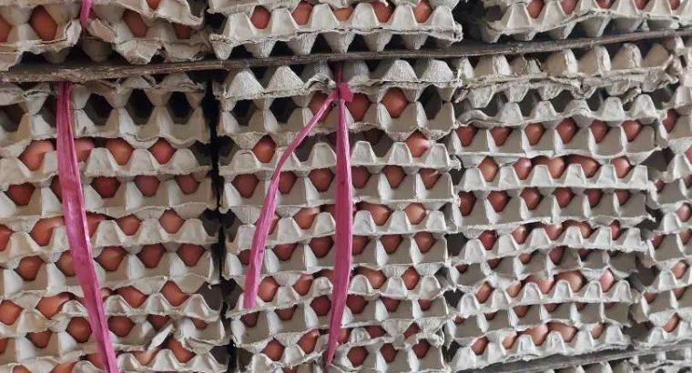 Distributor dan Agen Telur Ayam Negri