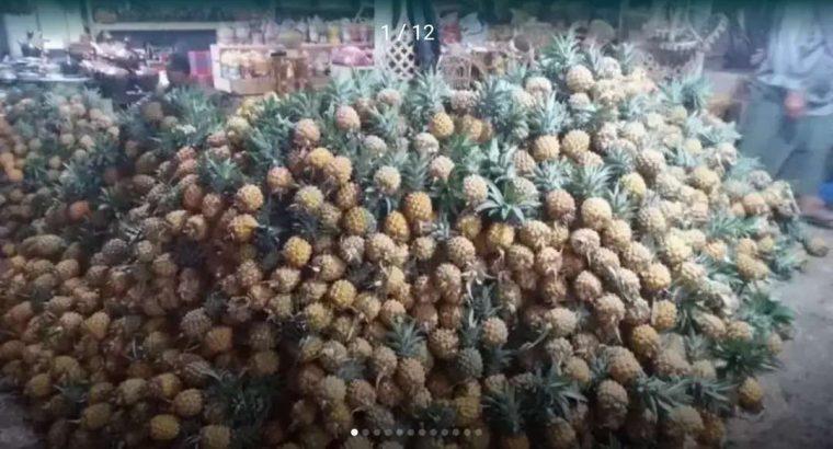 Grosir Agen nanas madu pemalang asli