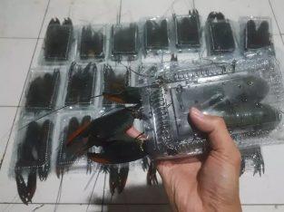 Jual Bibit Indukan Konsumsi Lobster Air Tawar Smrg