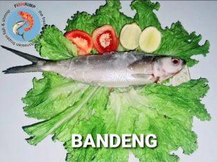Jual Ikan Bandeng Segar 1Kg