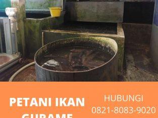 Supplier Agen Petani Jual ikan gurame Tangerang