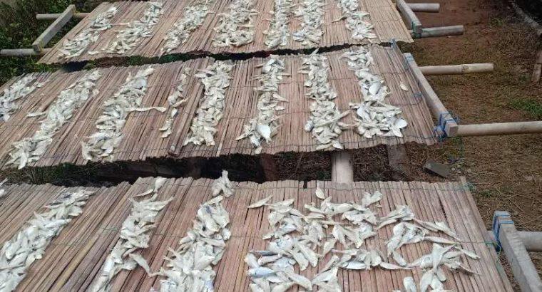 Grosir Ikan Teri Asin & Rebus Harga Murah