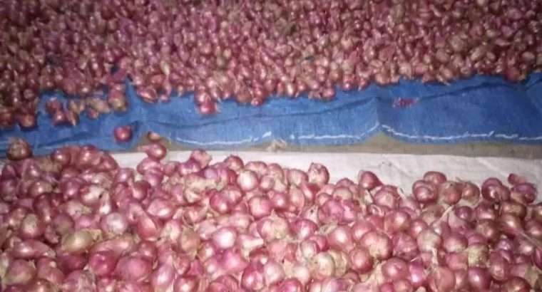 Jual Bawang Merah Murah – BRAMBANG WATES SRIKAYANG
