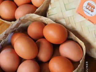 Jual telur herbal bebas antibiotik